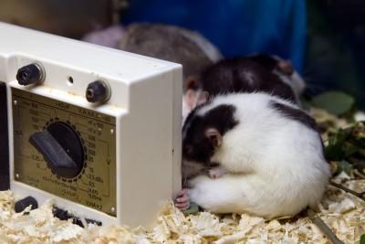 El uso de animales en el laboratorio de experimentación